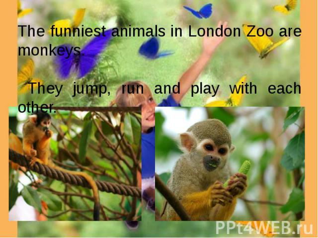 The funniest animals in London Zoo are monkeys. They jump, run and play with each other.