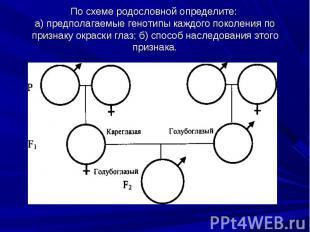 По схеме родословной определите: а) предполагаемые генотипы каждого поколения по