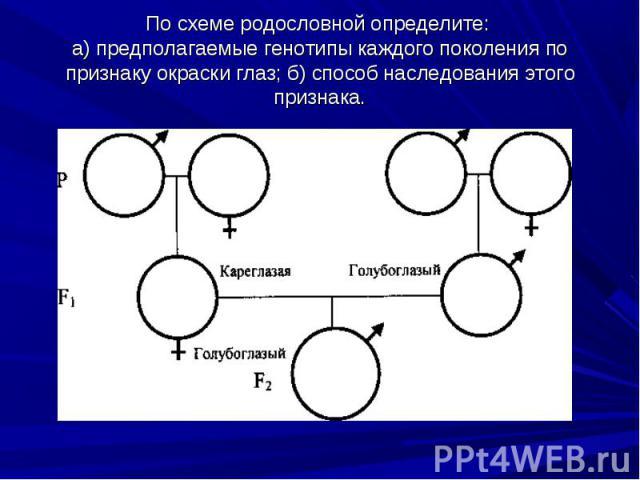По схеме родословной определите: а) предполагаемые генотипы каждого поколения по признаку окраски глаз; б) способ наследования этого признака.