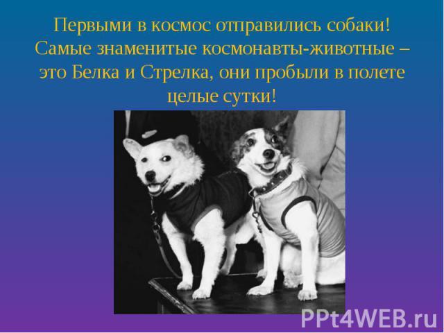 Первыми в космос отправились собаки! Самые знаменитые космонавты-животные – это Белка и Стрелка, они пробыли в полете целые сутки!
