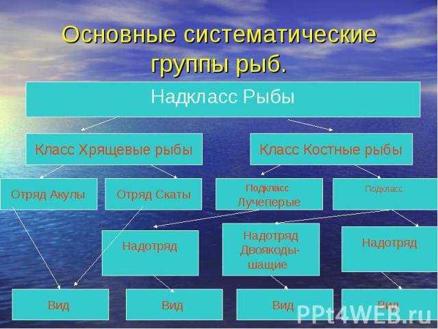 Основные систематические группы рыб.Надкласс Рыбы