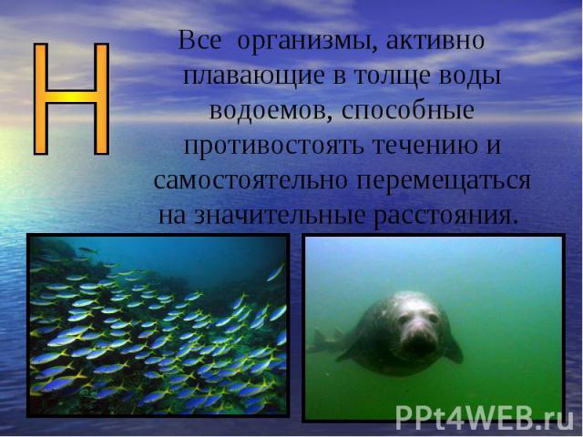 Все организмы, активно плавающие в толще воды водоемов, способные противостоять течению и самостоятельно перемещаться на значительные расстояния.