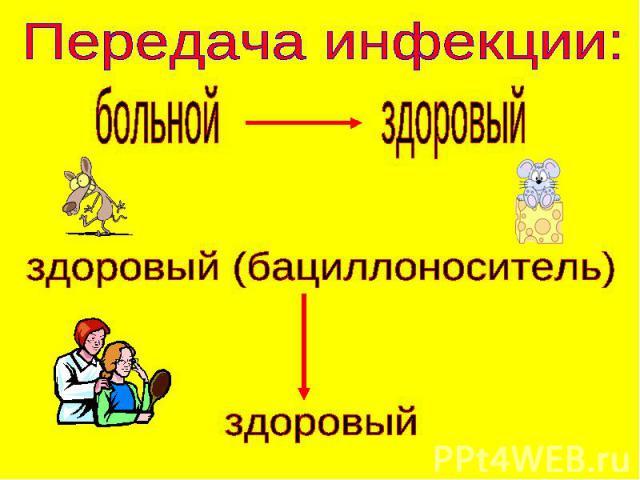 Передача инфекции: больной здоровый здоровый (бациллоноситель)здоровый