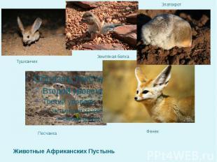 Животные Африканских Пустынь Песчанка