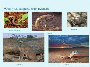 Животные африканских пустынь