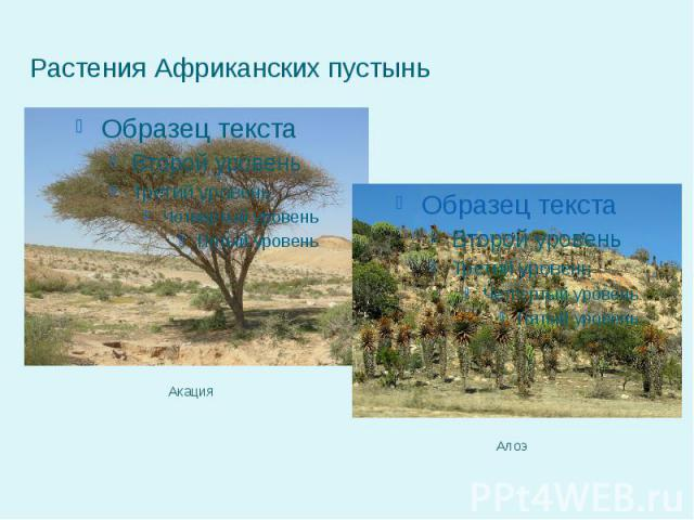 Растения Африканских пустынь