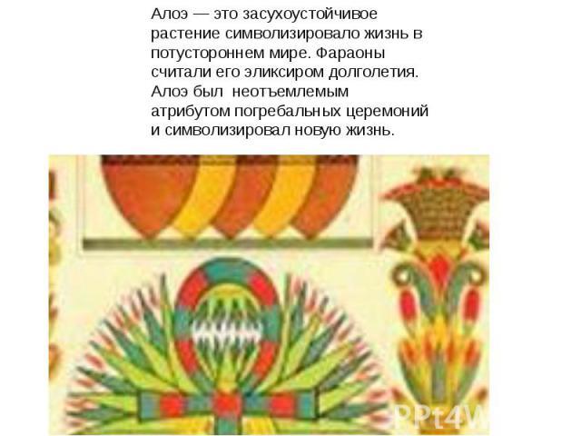 Алоэ — это засухоустойчивое растение символизировало жизнь в потустороннем мире. Фараоны считали его эликсиром долголетия. Алоэбыл неотъемлемым атрибутом погребальных церемоний и символизировал новую жизнь.