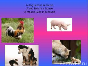 A dog lives in a houseA cat lives in a houseA mouse lives in a house