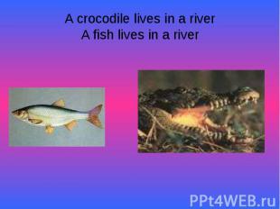 A crocodile lives in a riverA fish lives in a river