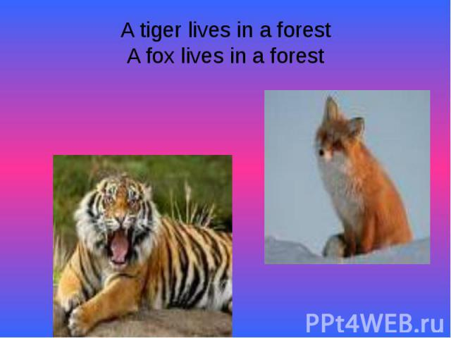 A tiger lives in a forestA fox lives in a forest