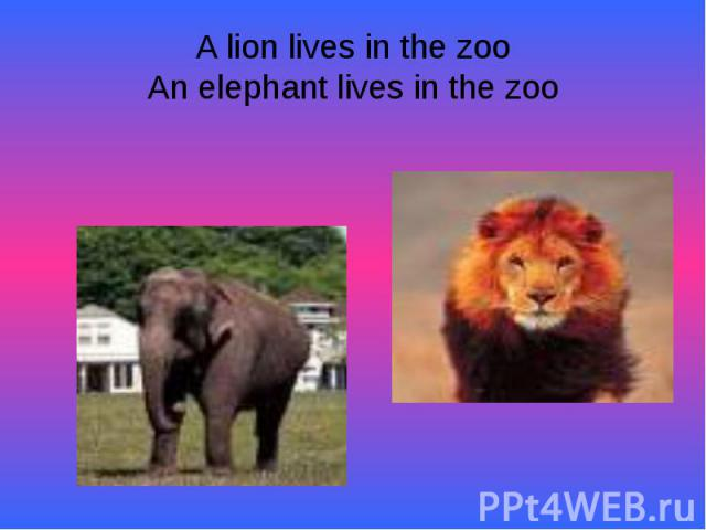 A lion lives in the zooAn elephant lives in the zoo