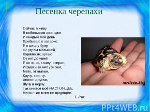 Песенка черепахи Сейчас я живу В небольшом зоопарке И каждый мой день Пребываю в