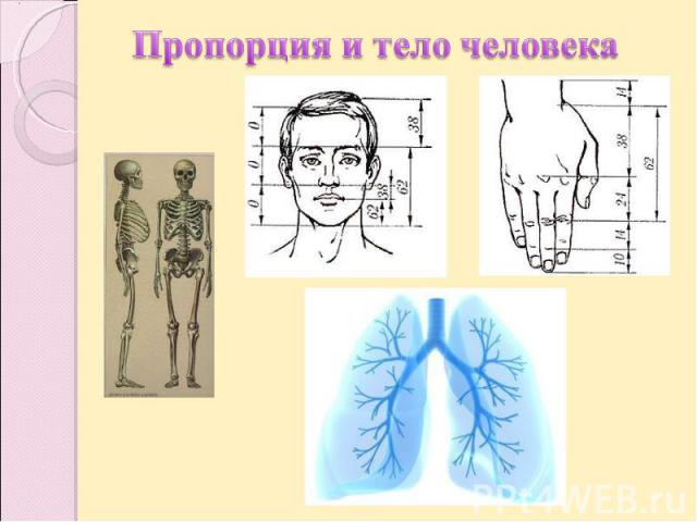 Пропорция и тело человека