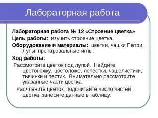Лабораторная работа Лабораторная работа № 12 «Строение цветка»Цель работы: изучи