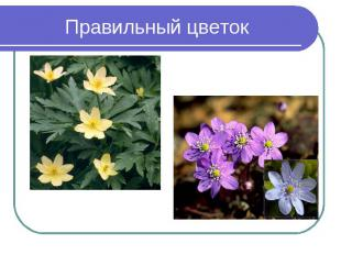 Правильный цветок