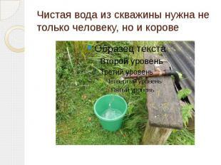 Чистая вода из скважины нужна не только человеку, но и корове