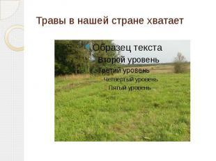 Травы в нашей стране хватает