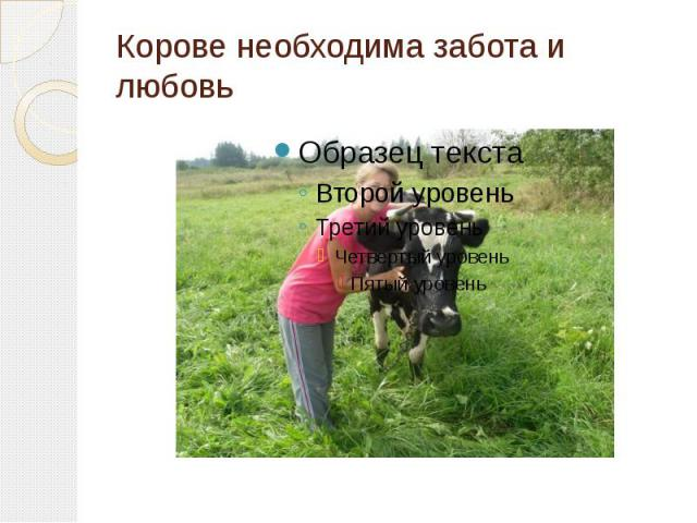 Корове необходима забота и любовь