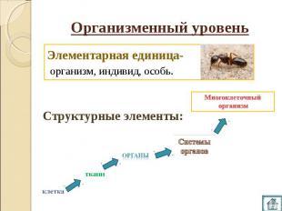 Организменный уровень Элементарная единица- организм, индивид, особь. Многоклето