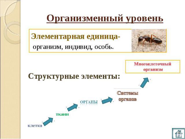 Организменный уровень Элементарная единица- организм, индивид, особь. Многоклеточный организм Структурные элементы: