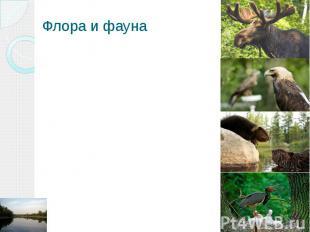 Флора и фауна