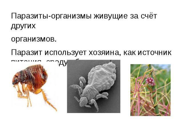 Паразиты-организмы живущие за счёт другихорганизмов.Паразит использует хозяина, как источник питания, среду обитания.
