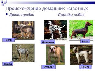 Происхождение домашних животных Дикие предки Породы собак