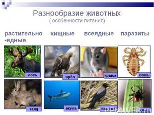 Разнообразие животных( особенности питания)