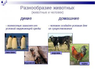Разнообразие животных(животные и человек)