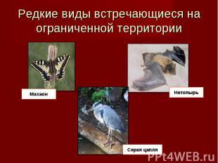 Редкие виды встречающиеся на ограниченной территории Махаон Нетопырь Серая цапля