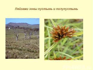 Пейзажи зоны пустынь и полупустынь