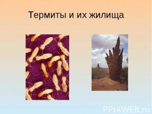 Термиты и их жилища