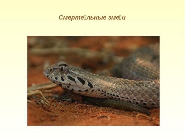 Смертельные змеи