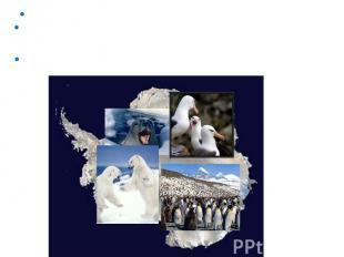 В Антарктиде зафиксирована самая низкая температура на Земле -89,2°С. Из-за очен