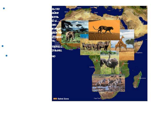 Внутренние воды распределены по территории континента крайне неравномерно: большая их часть расположена в центральной и восточной Африке. Для этого материка характерны транзитные реки (Нил) – реки, режим которых не соответствует климату территории п…