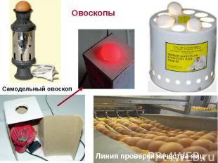 Овоскопы Самодельный овоскоп Линия проверки качества яиц