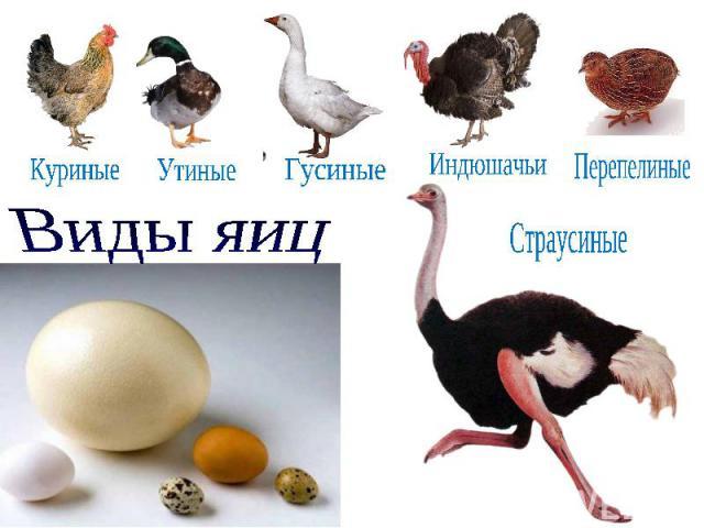 Куриные Утиные Гусиные Индюшачьи Перепелиные Страусиные Виды яиц
