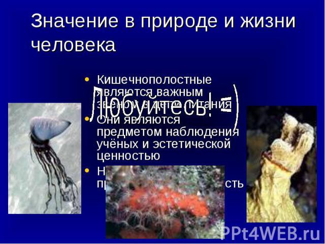 Значение в природе и жизни человека Любуйтесь! =) Кишечнополостные являются важным звеном в цепи питанияОни являются предметом наблюдения учёных и эстетической ценностьюНекоторые виды представляют опасность
