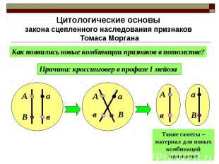 Цитологические основы закона сцепленного наследования признаков Томаса Моргана К