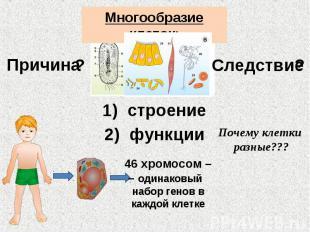 Многообразие клеток: Причина Следствие строение функции Почему клетки разные???