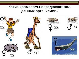 Какие хромосомы определяют пол данных организмов?
