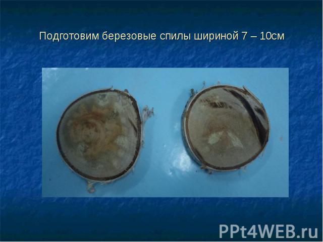 Подготовим березовые спилы шириной 7 – 10см