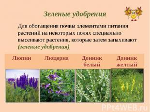 Зеленые удобрения Для обогащения почвы элементами питания растений на некоторых