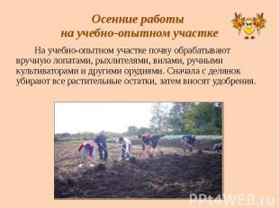 Осенние работы на учебно-опытном участке На учебно-опытном участке почву обрабат