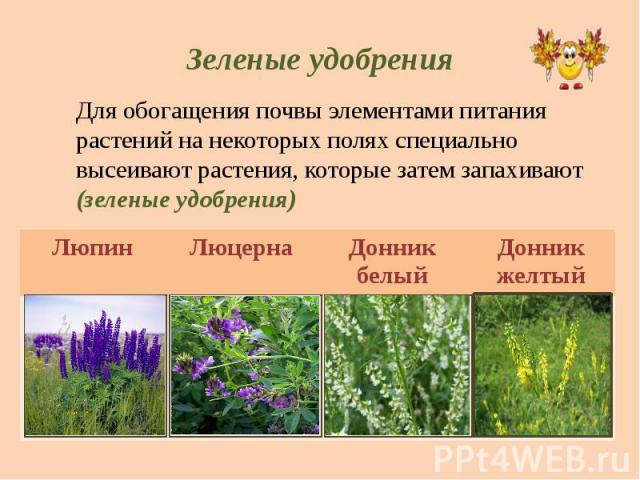 Зеленые удобрения Для обогащения почвы элементами питания растений на некоторых полях специально высеивают растения, которые затем запахивают (зеленые удобрения)