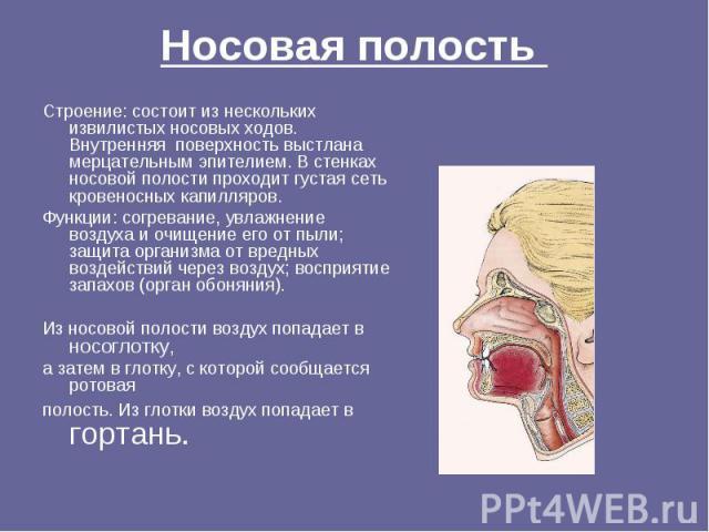 Носовая полость Строение: состоит из нескольких извилистых носовых ходов. Внутренняя поверхность выстлана мерцательным эпителием. В стенках носовой полости проходит густая сеть кровеносных капилляров.Функции: согревание, увлажнение воздуха и очищени…