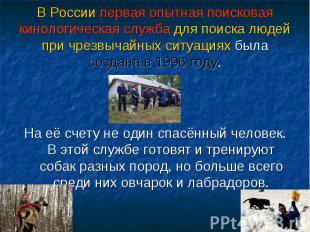 В России первая опытная поисковая кинологическая служба для поиска людей при чре