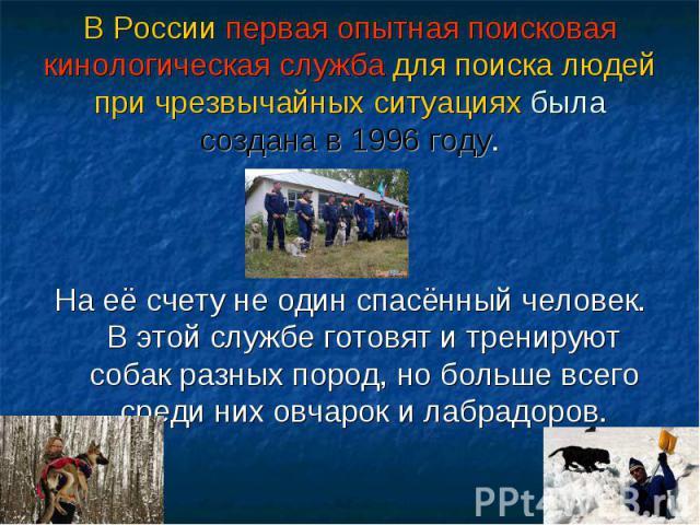 В России первая опытная поисковая кинологическая служба для поиска людей при чрезвычайных ситуациях была создана в 1996 году. На её счету не один спасённый человек. В этой службе готовят и тренируют собак разных пород, но больше всего среди них овча…
