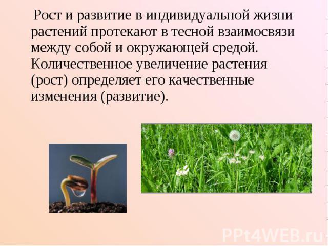 Рост и развитие в индивидуальной жизни растений протекают в тесной взаимосвязи между собой и окружающей средой. Количественное увеличение растения (рост) определяет его качественные изменения (развитие).