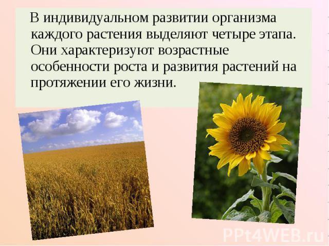 В индивидуальном развитии организма каждого растения выделяют четыре этапа. Они характеризуют возрастные особенности роста и развития растений на протяжении его жизни.